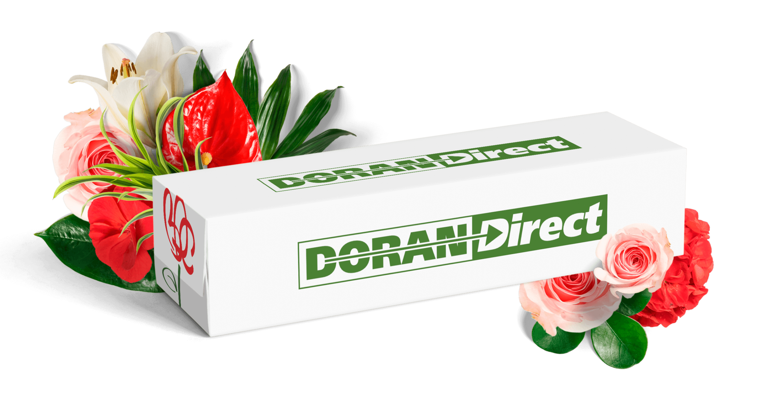 doran-box-3